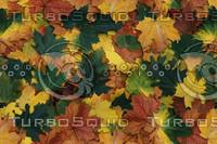 leaves-100.jpg
