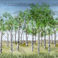 prairie-trees.jpg