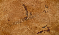 wood4024.jpg