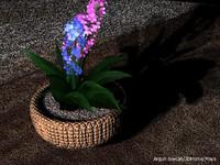 çiçek5a.jpg