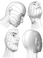 structure of the head and features.html.zip