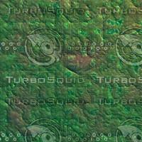 skin alien AA22435.jpg