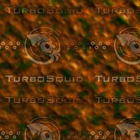 skin alien AA26441.jpg