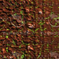 skin alien AA26451.jpg