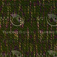 tree bark AA31243.jpg