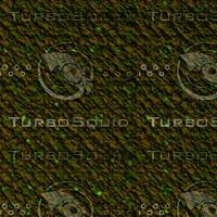 tree bark AA31249.jpg