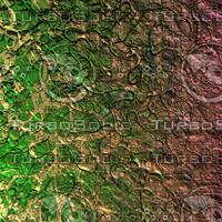nature shell AA34819.jpg