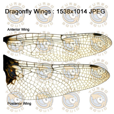 SP_DragonFlyWings001_Thumbnail.jpg