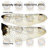 SPT_DragonFlyWings001