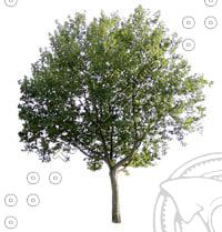 Tree-1_thumbnail2.jpg