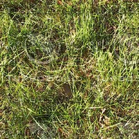 ground01p.jpg