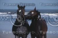 horsescu.JPG