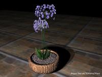 mavi çiçek4a.jpg
