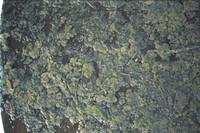 mossy floor.jpg