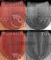 tongue_texture.jpg