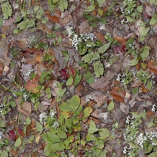 PM_LeafyGround.jpg