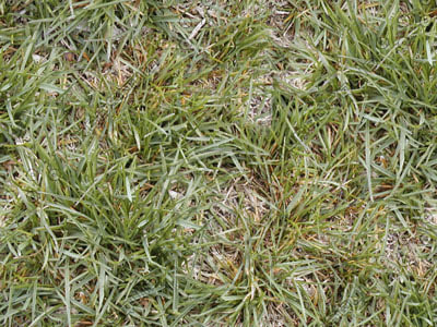 SP_Grass001.jpg_Thumbnail1.jpg
