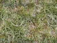 SPT_Grass001