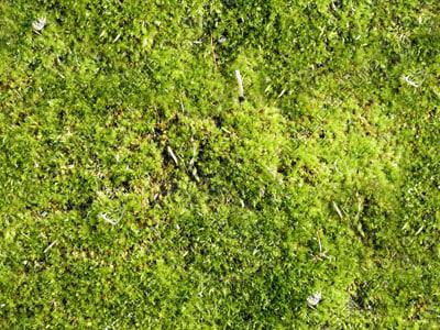 SP_Moss001.jpg_Thumbnail1.jpg