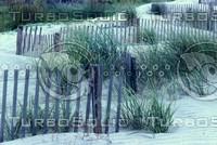 beachfence1.JPG