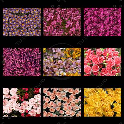 flowers_thumbnail3.jpg