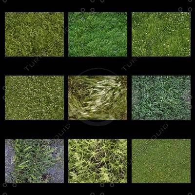 grass_thumbnail2.JPG
