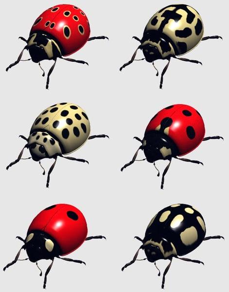 ladybirds.jpg