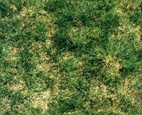 lushgrass.jpg