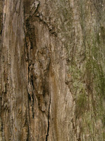 wood0018.jpg