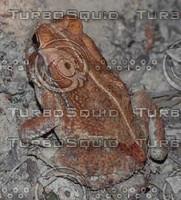 03DRS_toad_d5210531.tif