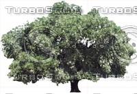 oak0002.ZIP