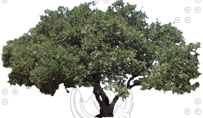 1-oak0003.jpg