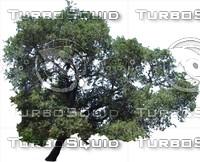 oak0005.ZIP