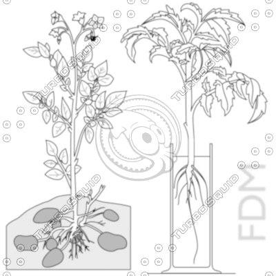 12 plants__ai_zip_thumbnail1.jpg