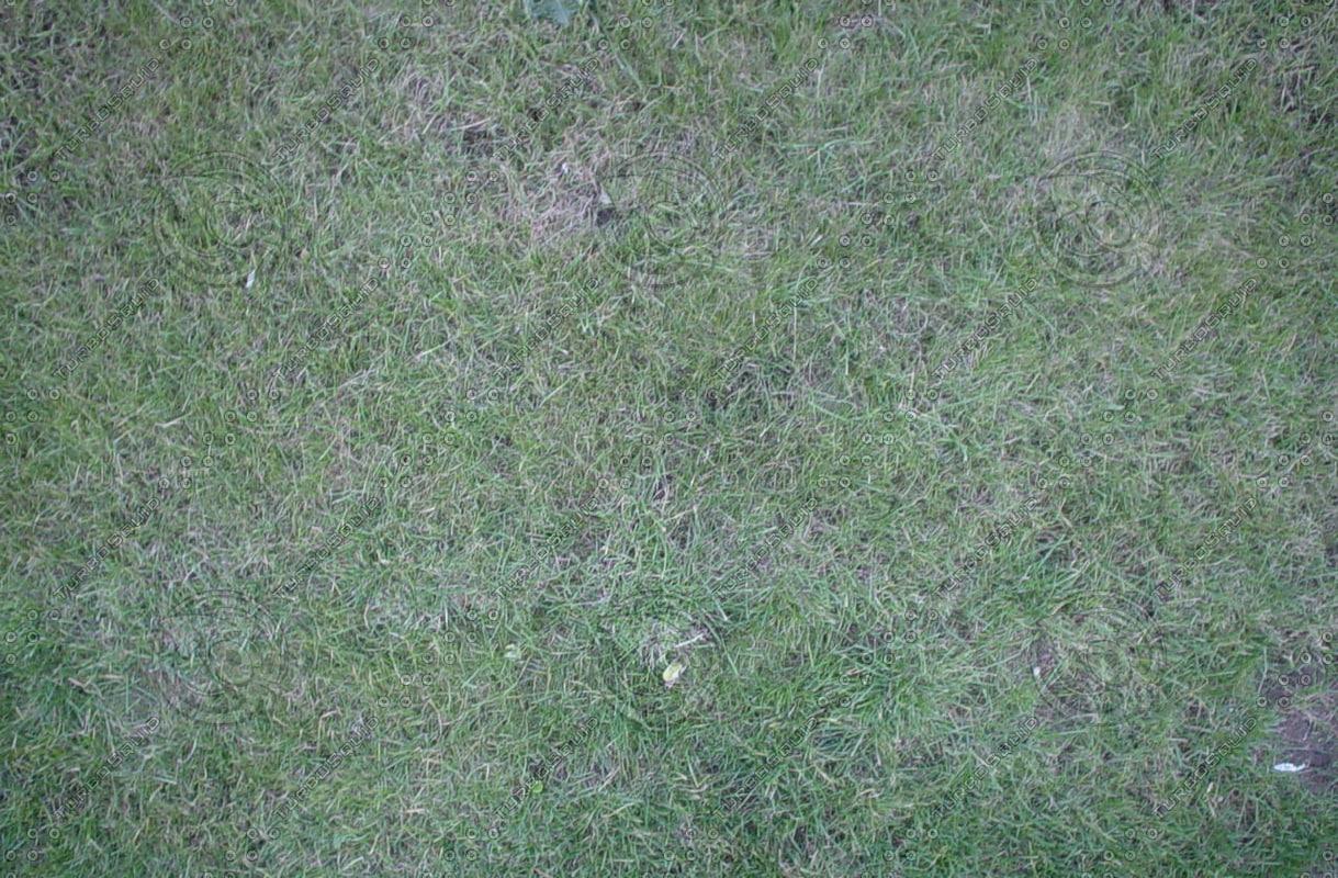 17-Grass.jpg