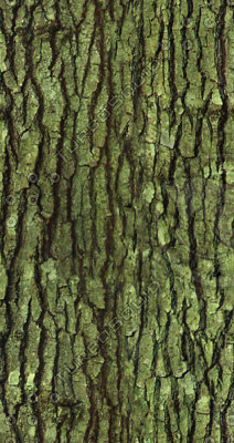 Bark1ColorT.jpg