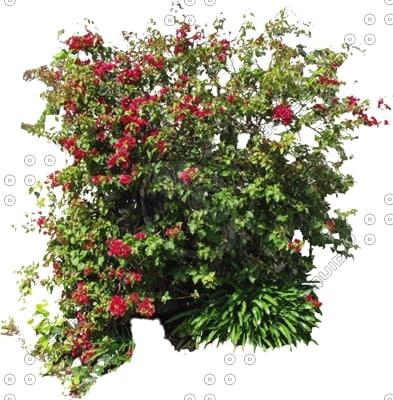 Bush0005.jpg
