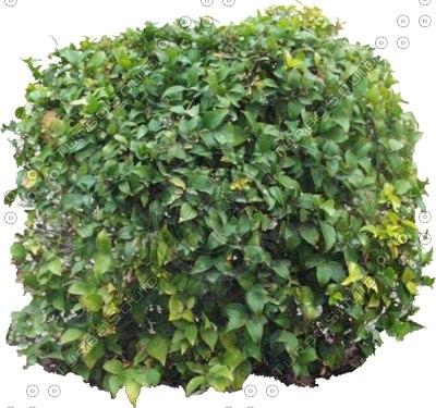 Bush0014.jpg