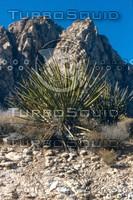 C Desert Cactus.jpg