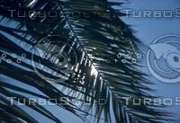 C Palm And Sun.jpg