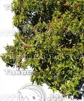 C_Tree0001.ZIP