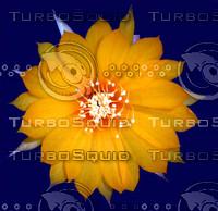 Cactus Flower.jpg