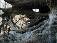 Dinosaur Wood.jpg