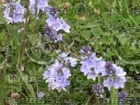 Flower08.JPG