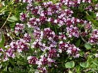 Flower28.JPG