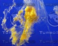 Jellyfish0002.JPG