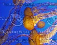 Jellyfish0004.JPG