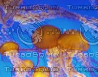 Jellyfish0005.JPG