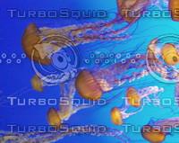 Jellyfish0006.JPG