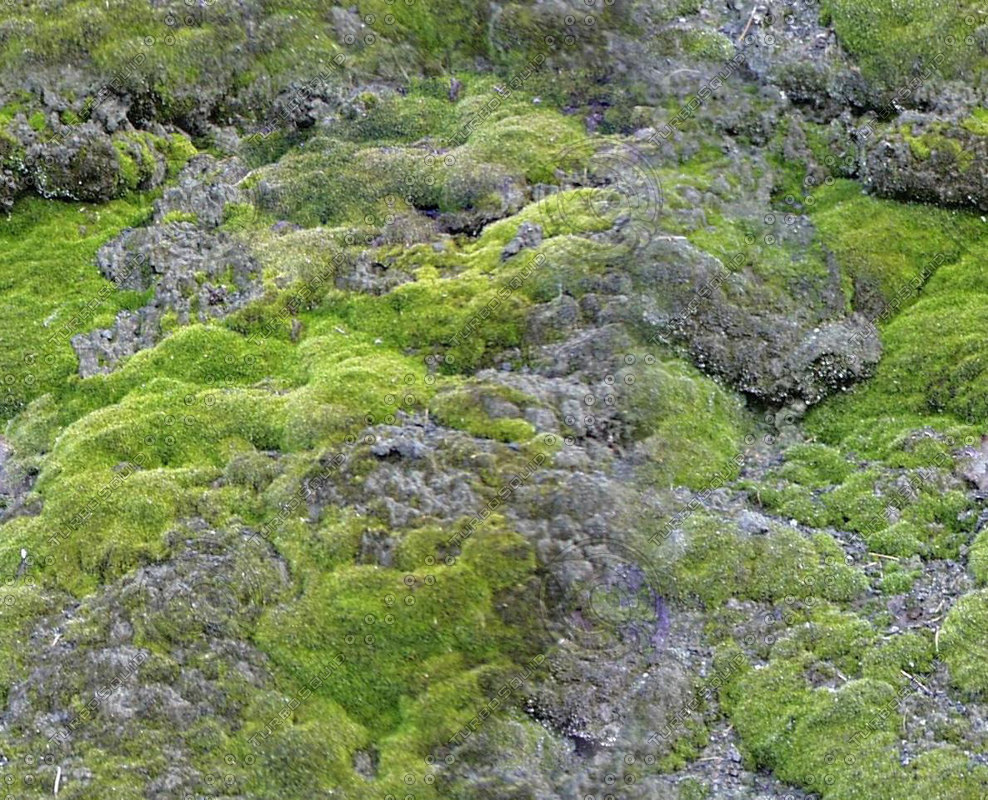 Moss00.jpg